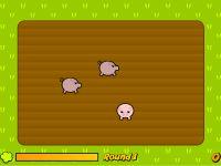 Pushy Schweine